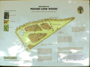 Pound Lane Wood information board